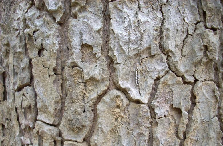 Free Stock Photo of Tree bark Created by Rhema Prabhata