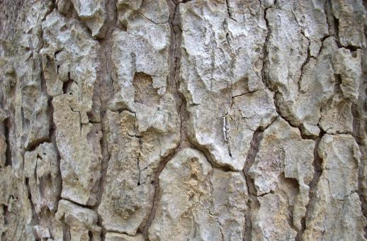 Tree bark - Free Stock Photo