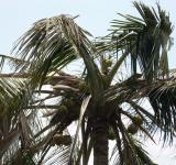 Free Photo - Palm tree top