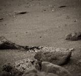 Free Photo - Rocks and sand