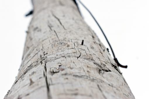 Wooden pole - Free Stock Photo