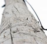 Free Photo - Wooden pole
