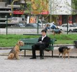 Free Photo - Dog and man