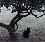 Free Photo - Black cat under a tree