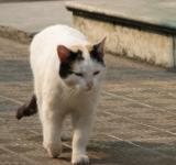 Free Photo - White Cat