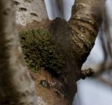 Free Photo - Green fungus on a tree