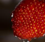 Free Photo - Wet strawberry