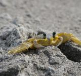 Free Photo - Crab on black beach