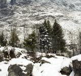 Free Photo - Alpine view