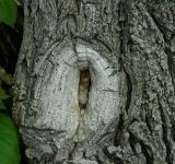 Free Photo - Tree Knot
