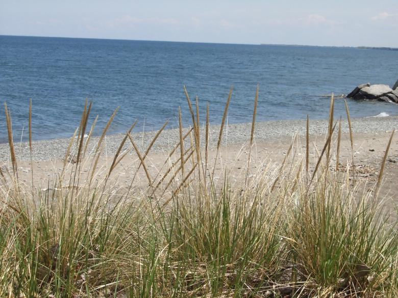 Grass at the beach Free Photo