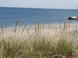 Download Grass at the beach Free Photo