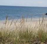 Free Photo - Grass at the beach