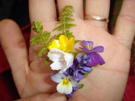 Flowers in a hand - Free Stock Photo