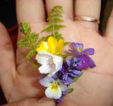 Free Photo - Flowers in a hand