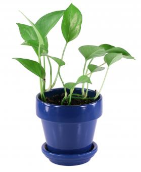 Small House Plant - Free Stock Photo