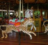 Free Photo - Cougar Carousel