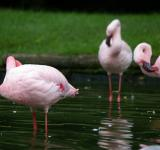 Free Photo - Pink flamengos