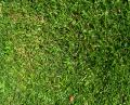 Free Photo - Plain Grass Area