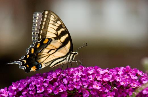 Feeding Butterfly - Free Stock Photo