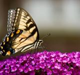 Free Photo - Feeding Butterfly