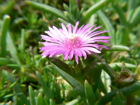 Pink flower - Free Stock Photo