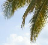 Free Photo - Palm tree and the sky