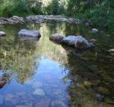 Free Photo - Nature reflections