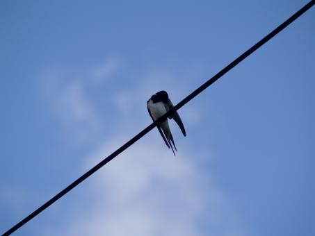 Bird on a wire - Free Stock Photo