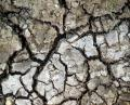 Free Photo - Cracked dirt Texture