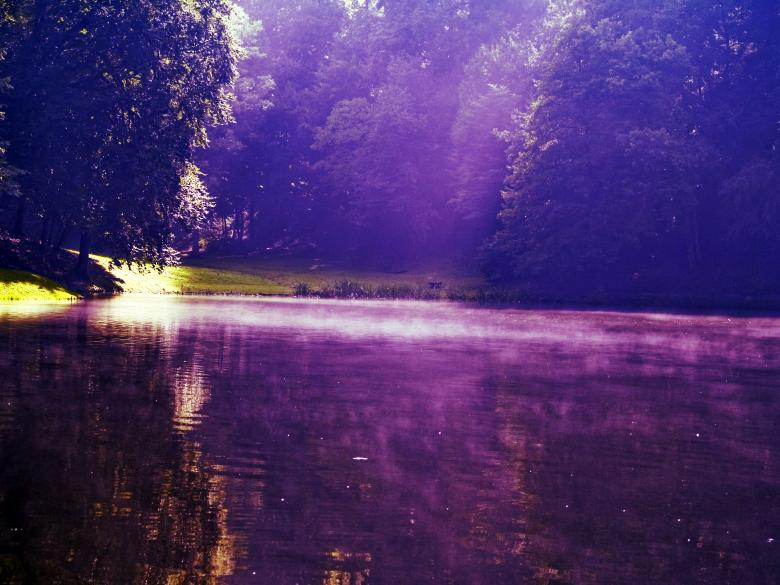 Lake in the woods Free Photo