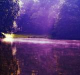 Free Photo - Lake in the woods