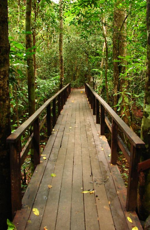 Free Stock Photo of Small Bridge in The Forest Created by Tossaporn Santad