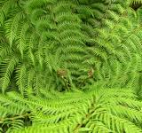Free Photo - Green fern