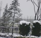 Free Photo - Heavy snow in the pines
