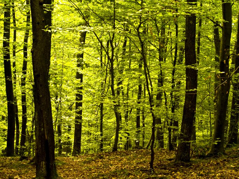 Deep forest - Free Forest Stock Photos