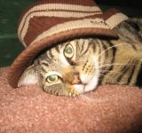 Free Photo - Cat in the hat!