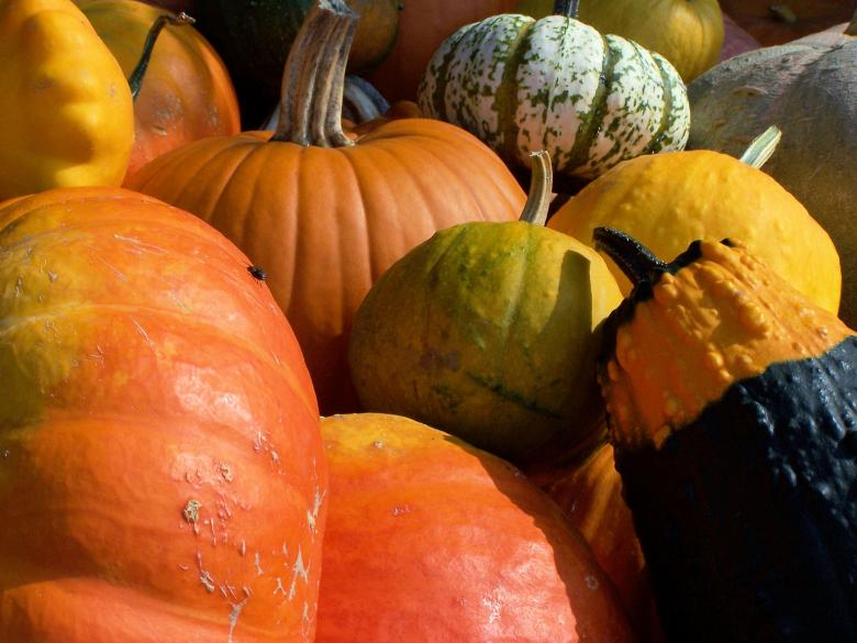 Free Stock Photo of Colorful pumpkins in fall Created by Marc