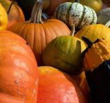 Free Photo - Colorful pumpkins in fall