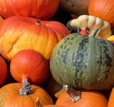 Free Photo - Colorfull pumpkins in fall