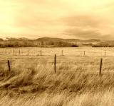 Free Photo - Vast field