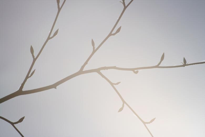 Free Stock Photo of Branches Created by AD