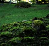 Free Photo - Green Forest