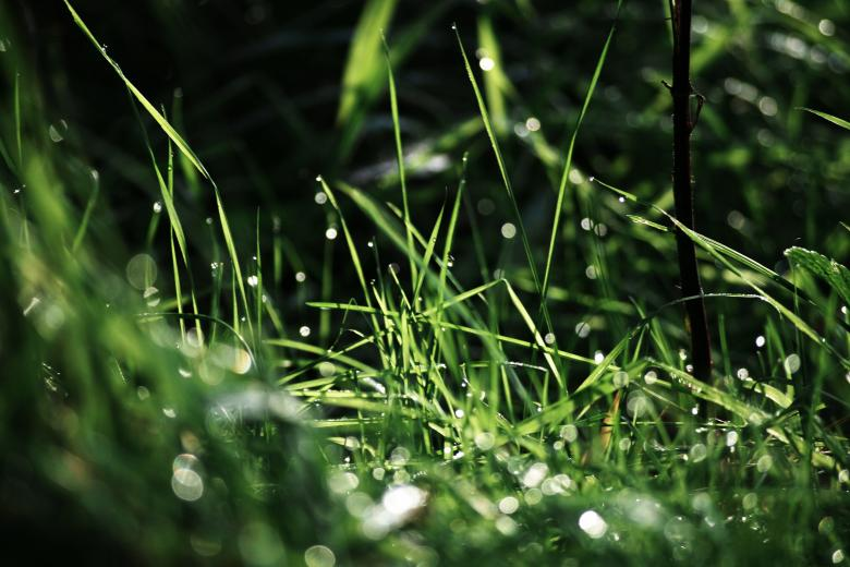 Free Stock Photo of Rainy Grass Created by AD
