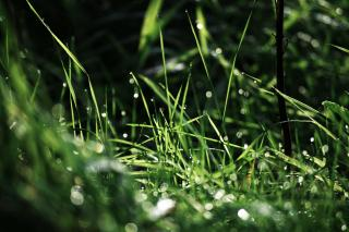 Rainy Grass Free Photo