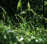 Free Photo - Rainy Grass