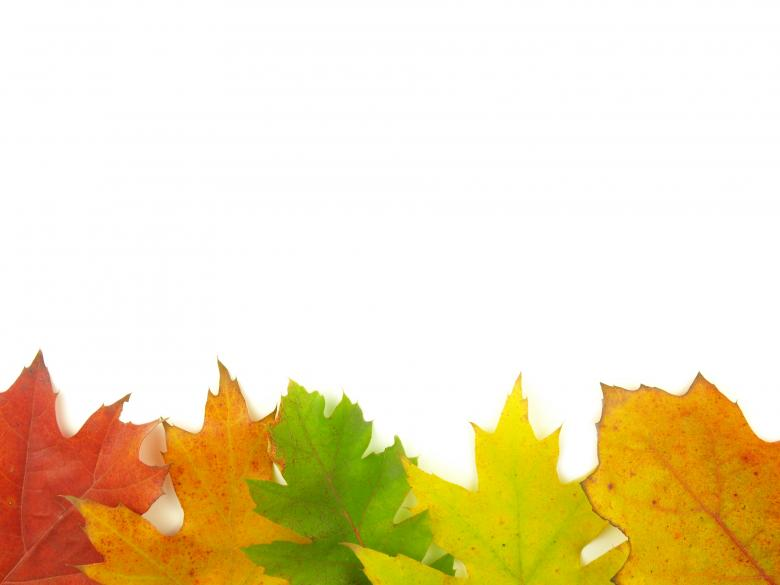 Free Stock Photo of Autumn Leaves - Bottom Frame Created by luckyhumek