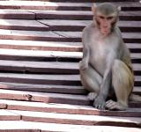 Free Photo - Handicapped Monkey