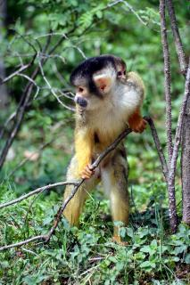 Download Monkey Free Photo