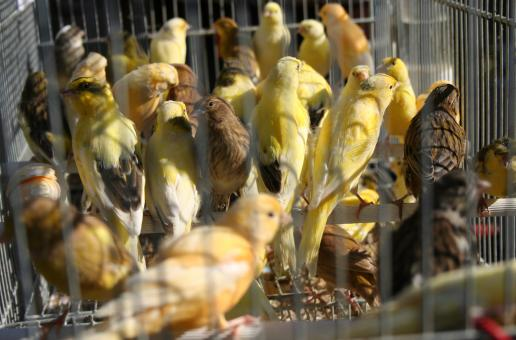 Crowded cage - Free Stock Photo